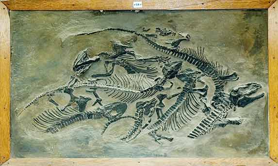 палеозойских земноводных,